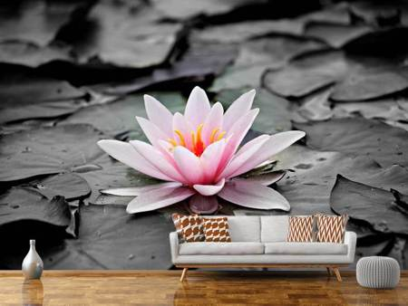 Photo Wallpaper The art of water lily