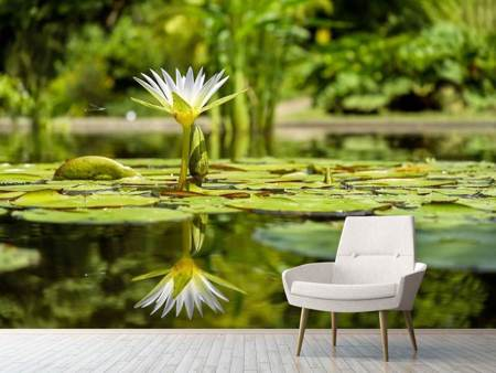 Photo Wallpaper Water lily in nature
