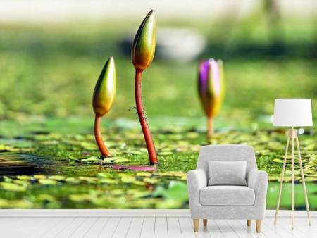 Photo Wallpaper Water lilies in XL