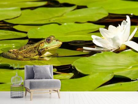 Photo Wallpaper The frog and the water lily