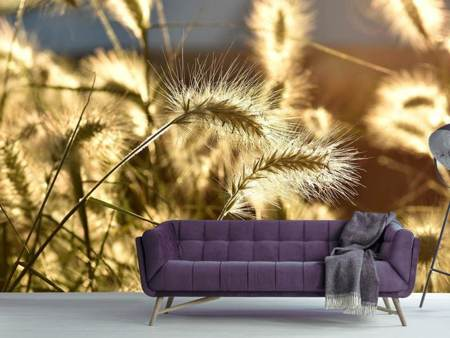 Photo Wallpaper Ornamental grass in the sunlight