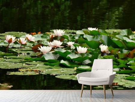 Photo Wallpaper A field full of water lilies