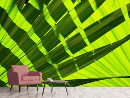 Photo Wallpaper The palm leaf in XL