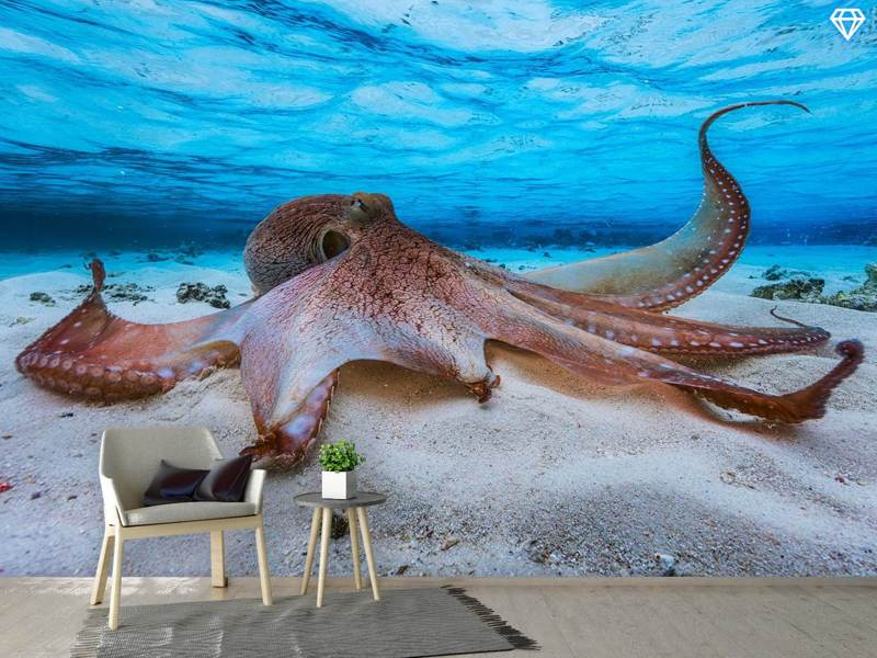 Photo Wallpaper Octopus