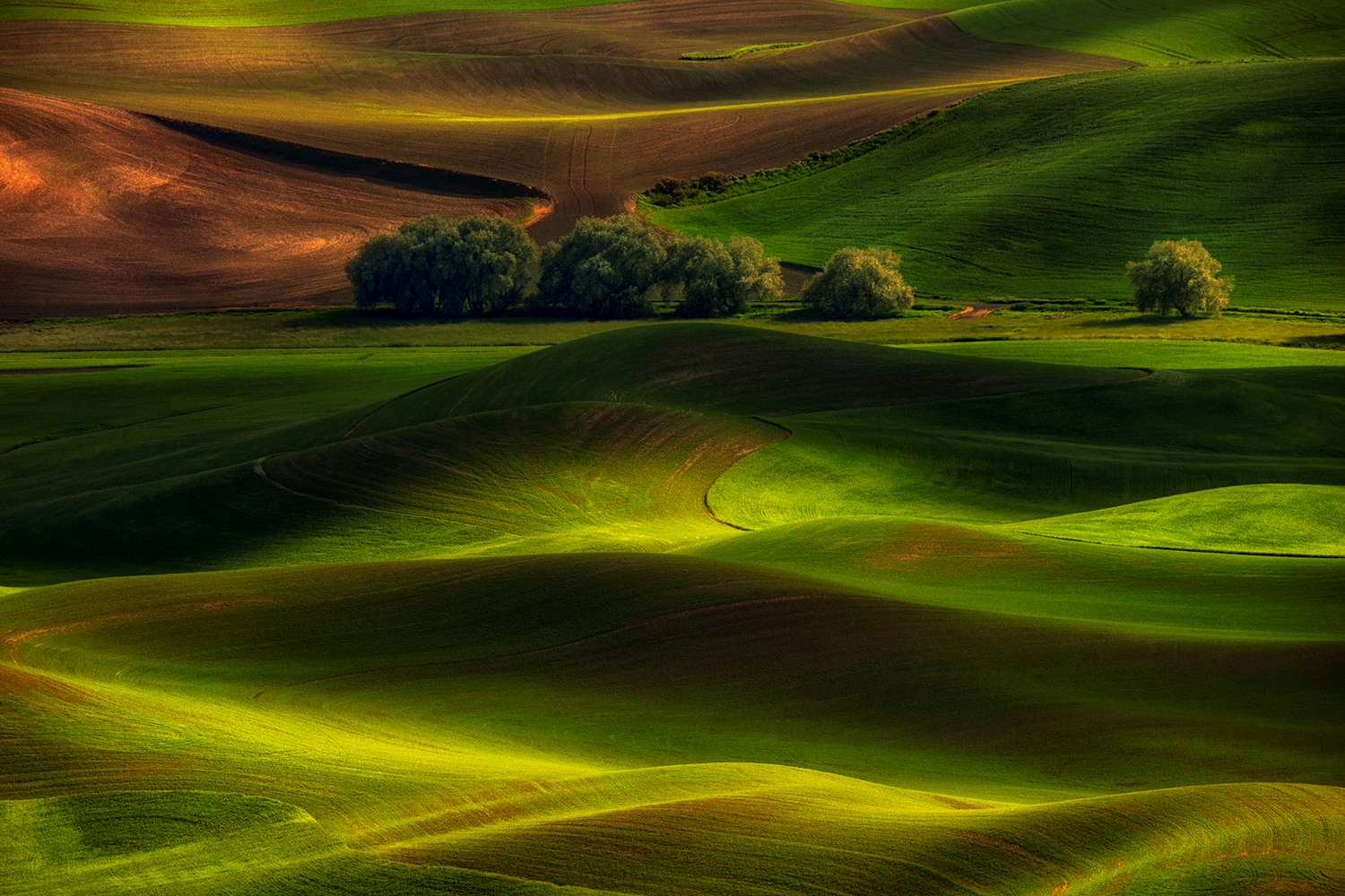 Fototapet Spring In The Palouse