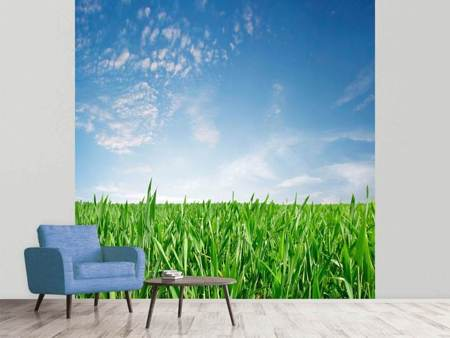 Photo Wallpaper The Grass