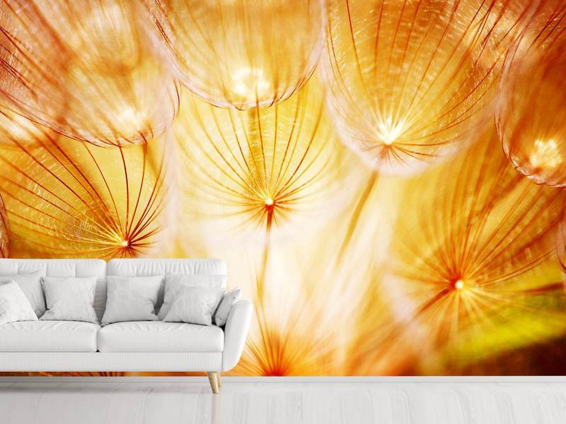Photo Wallpaper Close Up Dandelion In Light