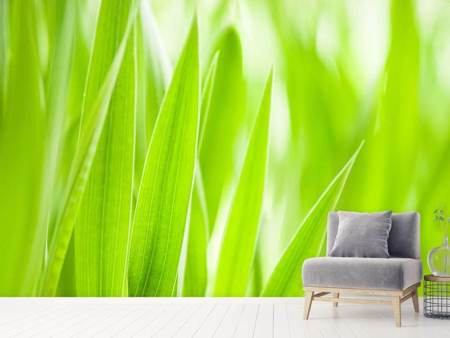 Photo Wallpaper Grass XXL
