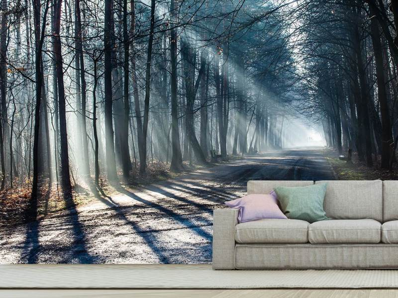 Photo Wallpaper Forest In The Light Beam